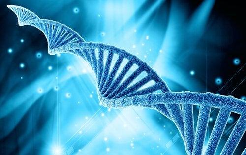 magen ansamlar fett av genetiska skäl