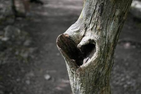 Hjärta i träd