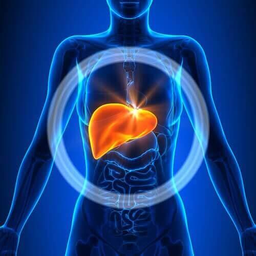 förstorad lever symptom