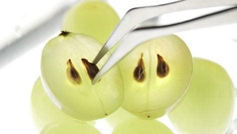 Vindruvskärnor