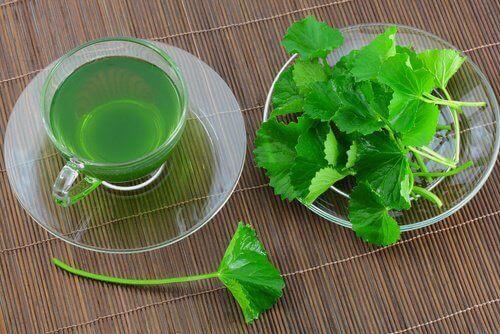 Gör en infusion med persilja och kryddnejlika