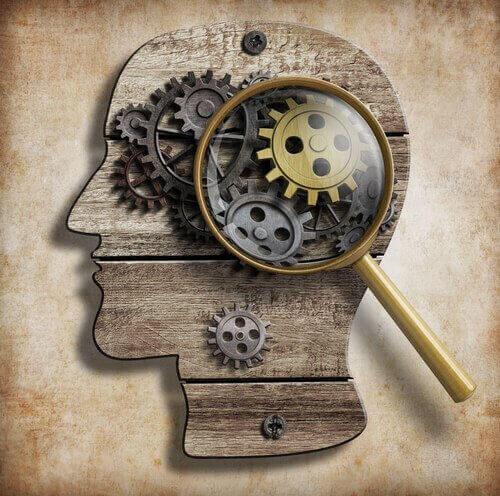 Hjärnan i närbild
