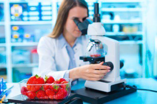 3-strawberries-microscope