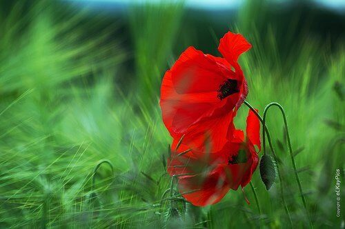 Blomma i gräset