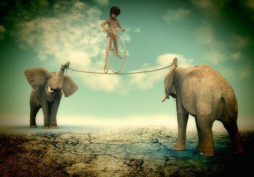 barn cyklar på lina mellan elefanter