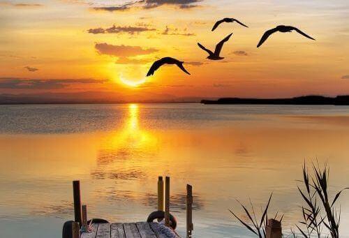 Fåglar-i-solnedgång