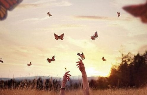 Fjärilar flyger över ängen