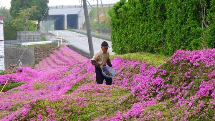 Kurokis trädgård med blommor