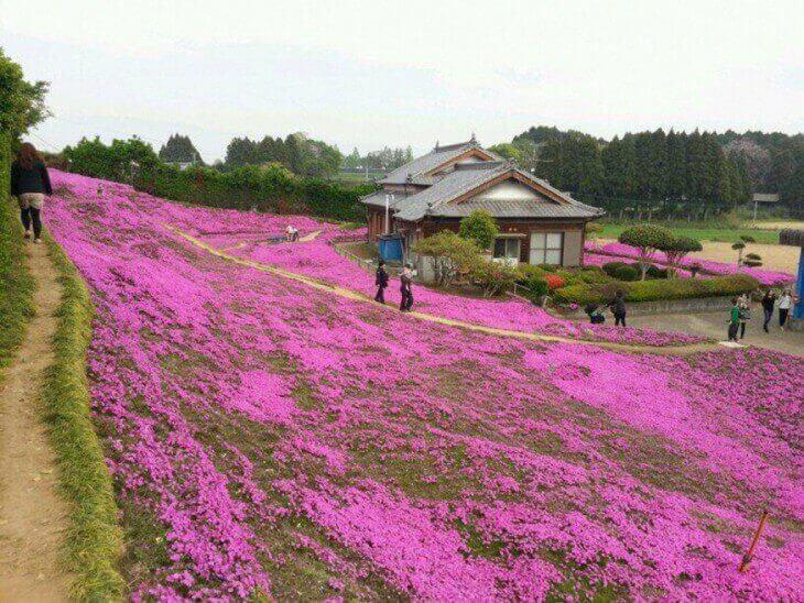 Trådgård med blommor
