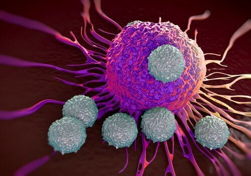 Cancerceller kan kringgå immunförsvaret