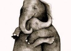 1-elephant-hugs