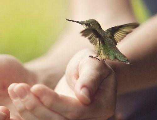 kolibri sittandes på en hand