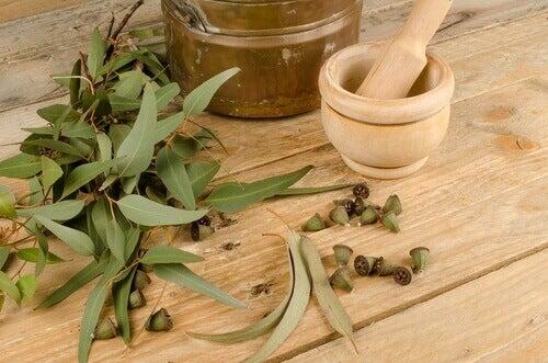 Eukalyptus luktar fräscht