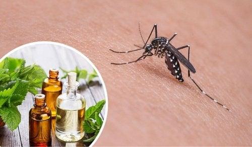 Håll-myggor-borta