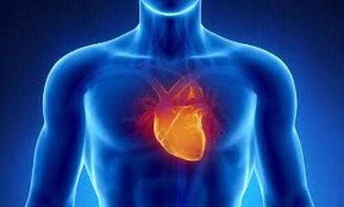 Hjärta i människokroppen