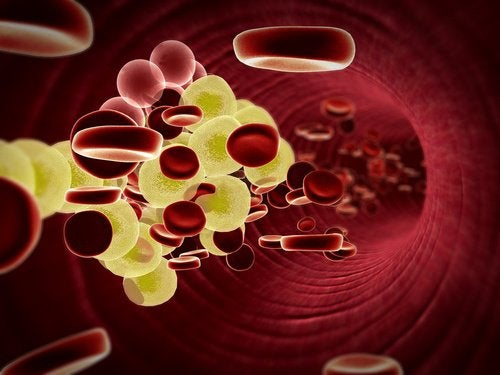 röda blodceller