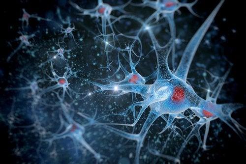 Nervceller i kroppen