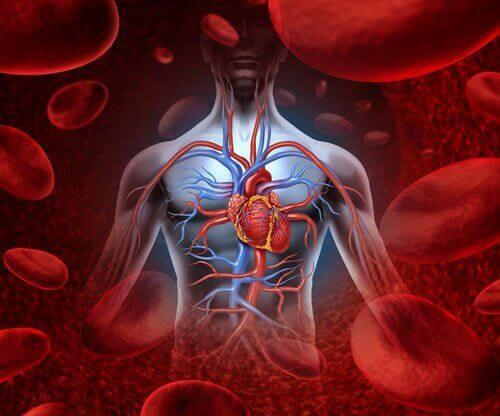 blodkroppar