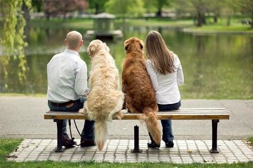 par med hundar