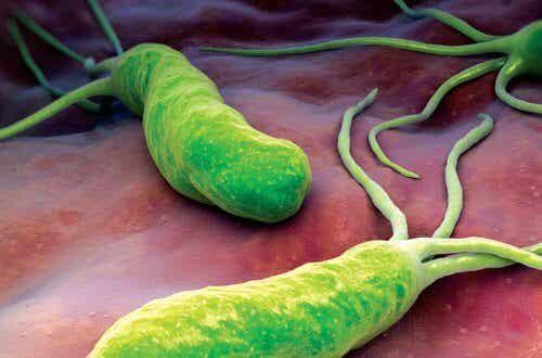 Bekämpa bakterien som orsakar diarré & uppsvälldhet