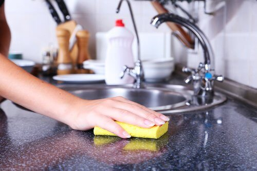 Visste du att disksvampar är fyllda med bakterier?