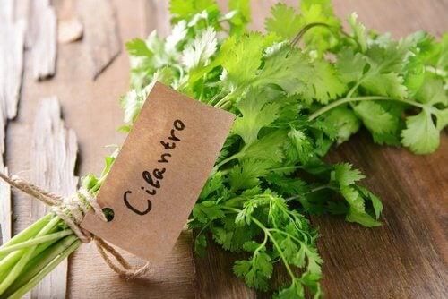 Varför koriander är så nyttigt för hälsan
