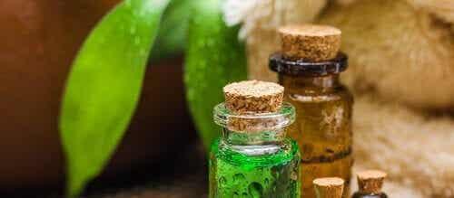 Tea tree-olja: en fantastisk olja med många fördelar