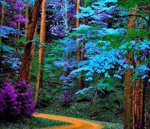 färgglada träd