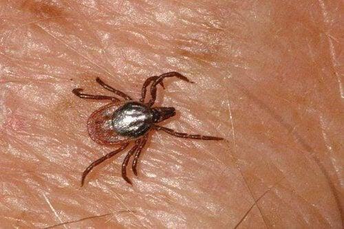 Fall av blödarfeberviruset Krim-Kongo upptäcks i Spanien