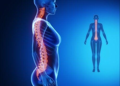 ryggraden är kopplad till resten av kroppen