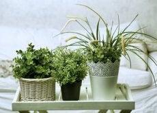 Växter för sovrummet