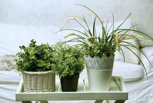 6 underbara växter för sovrummet