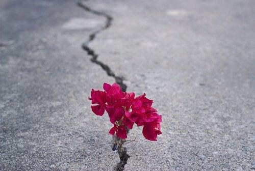 blomma i asfalt