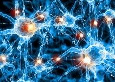 hjarnneuroner