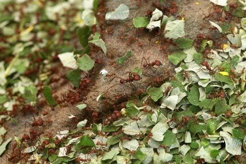 myror i trädgården