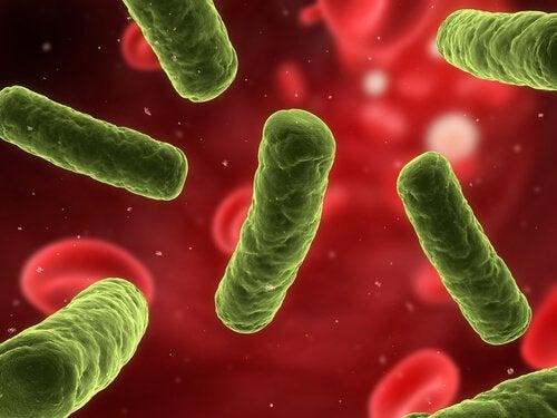 Fler och fler sjukdomar associeras med det autoimmuna systemet
