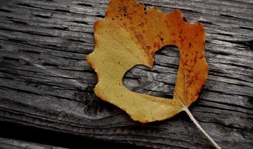 Hjärta i löv