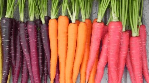 Morötter finns i olika färger