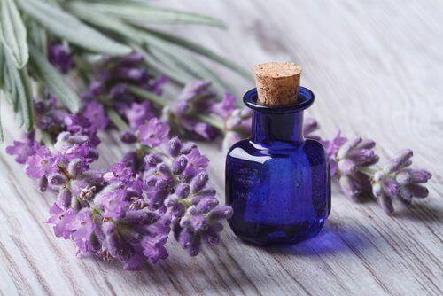 Lavendelolja mot nacksmärta