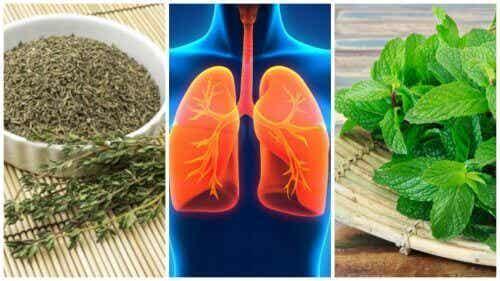 8 örter du kan använda för att förbättra din lunghälsa