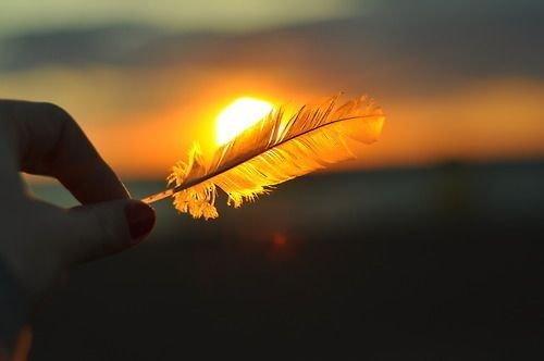 Fjäder i solnedgång