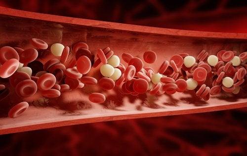 Blodkroppar i artär