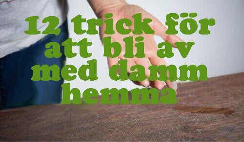 12 trick för att bli av med damm hemma