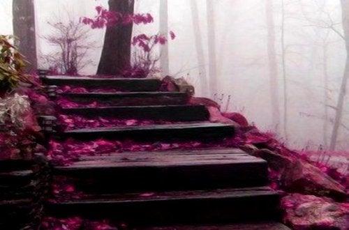trappa i dimmig höstskog