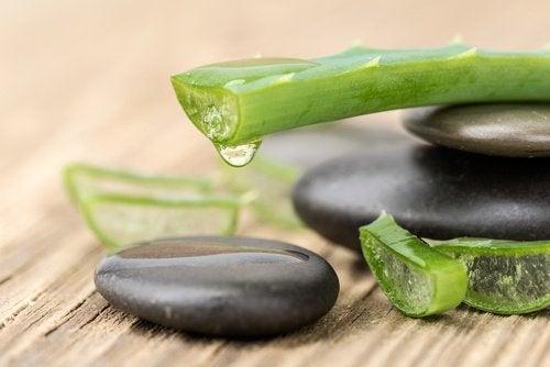 Aloe vera är en lindrande behandling