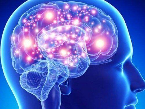 De bästa örterna och kryddorna för hjärnan