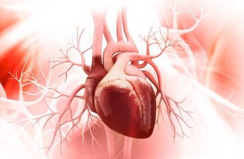 Flavonoider.minskar risken för hjärtsjukdomar