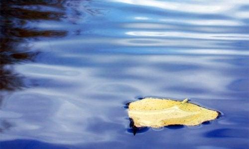 löv i vatten