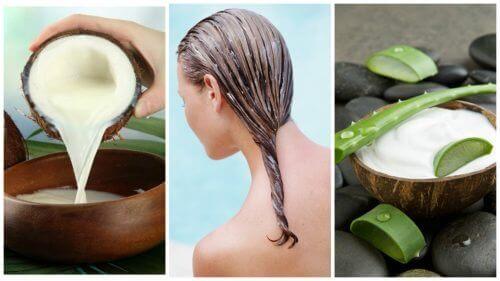 Minska håravfall med aloe vera och kokosmjölk