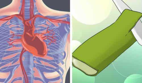 5 kraftfulla sätt aloe vera tar hand om hjärtat